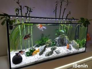 Réalisation et vente d'aquarium